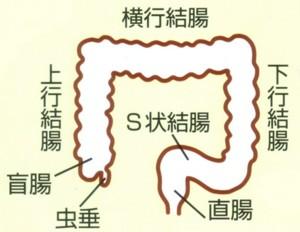 health_daicho_01.jpg